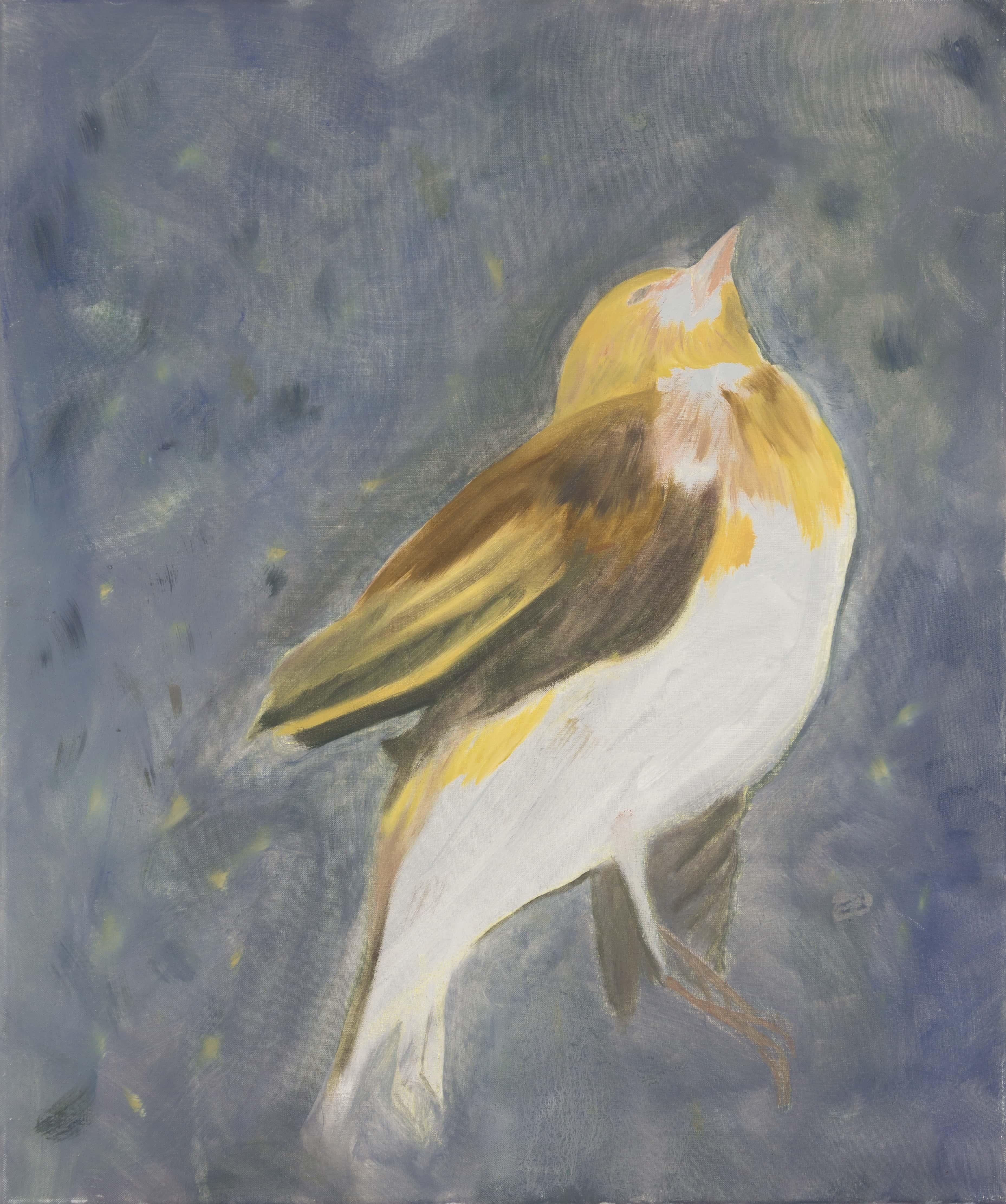 Malerei, Öl auf Leinwand, 50cm x 60cm, Toter Vogel, artist: Franziska King