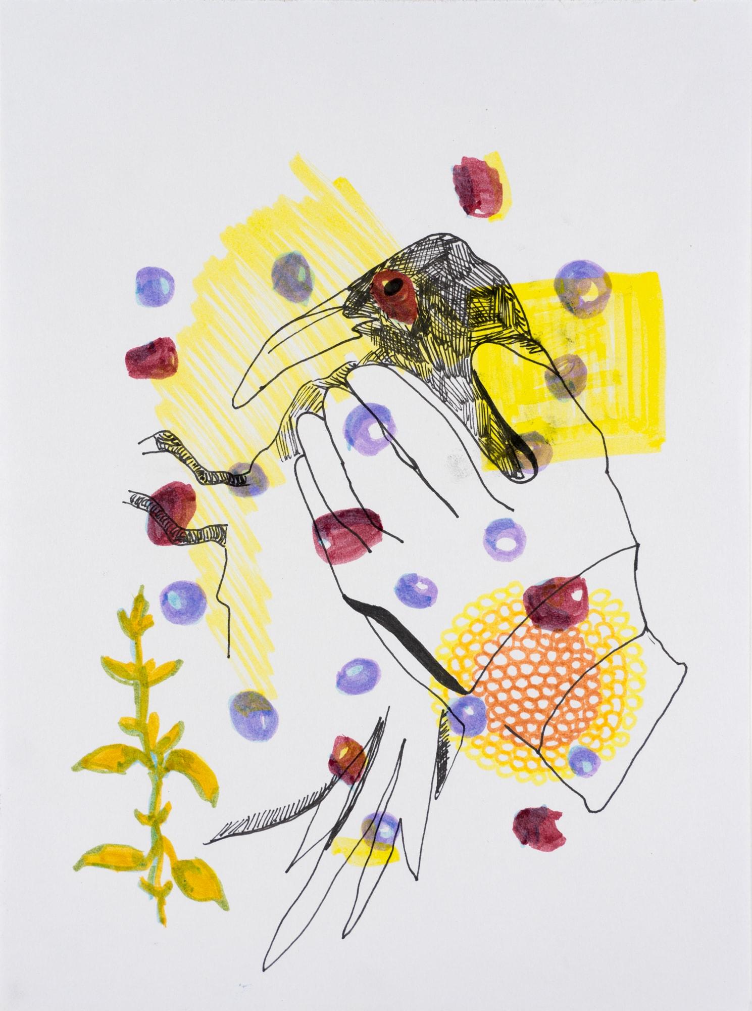 Zeichnung, Marker, Mischtechnikt und Tusche auf Papier, 21x28,5cm, Krähe in Hand mit Beeren, Künstlerin: Franziska King