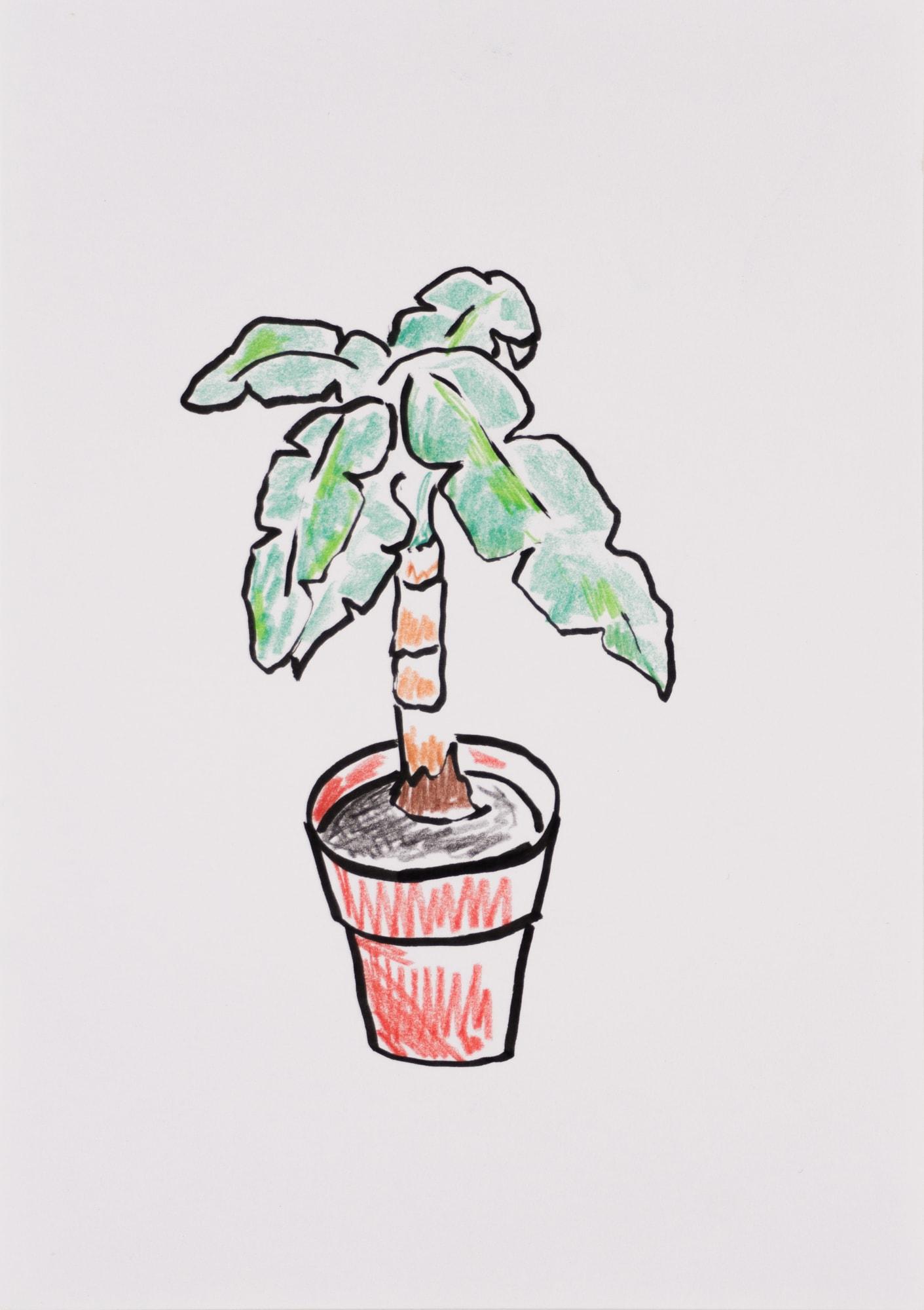 Zeichnung, Farbstift und Tusche auf Papier, 14,8x20,8cm, Bananenpflanze im Blumentopf, Künstlerin: Franziska King